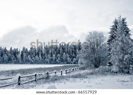 Winter landscape. Winter wood and lake covered with ice