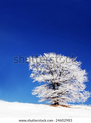 winter landscape with a cloud and a snow-covered tree