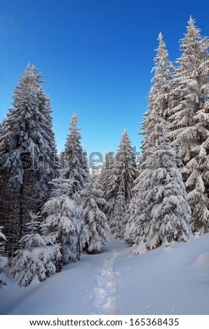 Winter landscape with a road in the forest. A cold day in a mountain valley
