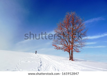 winter landscape with a solitary red tree and person walking