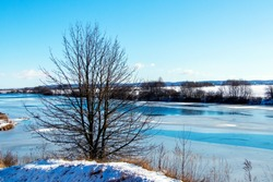 Winter landscape with a tree on the shore river in sunny weather