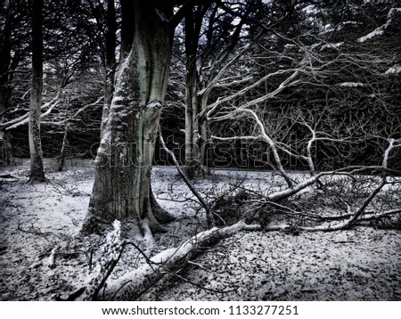 winter landscape with bare trees snow in the woods snow in the woods forest at night #1133277251