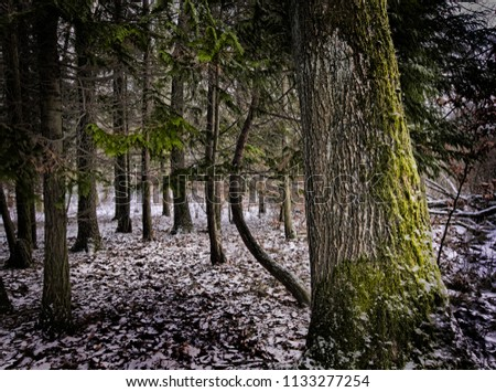 winter landscape with bare trees snow in the woods snow in the woods forest at night #1133277254
