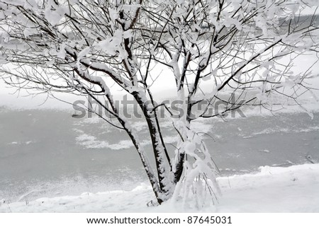 winter landscape with covered by snow tree on the frozen riverside
