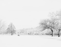 Winter landscape with deserted bench covered in fresh snow
