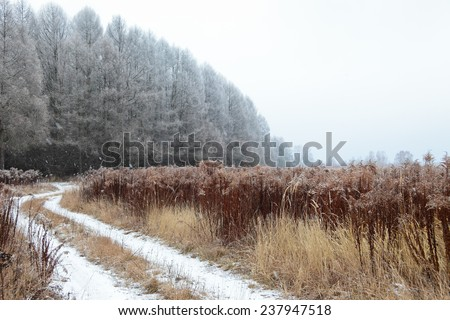 Winter landscape with falling snow at very cold weather.