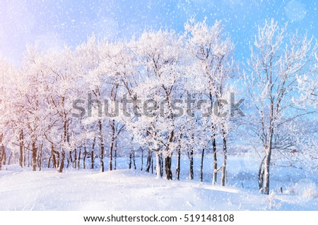 Winter landscape with falling snow - wonderland forest scene with snowfall and sunlight over winter grove. Snowy winter landscape of the frosty forest - scene with Christmas and New Year mood