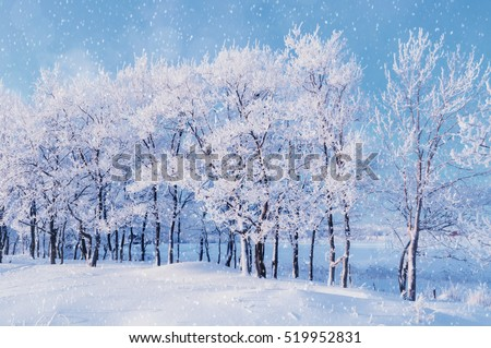 Winter landscape with falling snowflakes - forest trees under evening snowfall and soft sunlight over forest grove #519952831