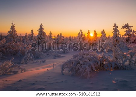 Winter landscape with forest, trees, sunset. Tone. Winter landscape Winter landscape Winter landscape Winter landscape Winter landscape Winter landscape Winter landscape Winter landscape