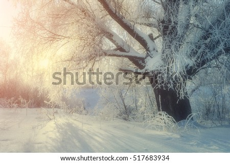 Winter landscape with frosty deciduous tree in the morning sunlight #517683934