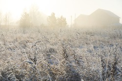 Winter landscape with frozen bare trees on a field covered with frozen dry grass in a thick fog during sunrise in Siberia, Russia
