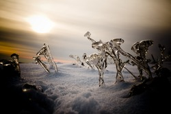 Winter landscape with frozen plants in sunset lights. (vignetted, horizontal)