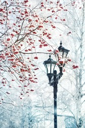 winter landscape with lantern and red ashberry. beautiful winter scene with frozen snowy tree. new year and christmas time background