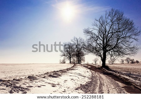 winter landscape with old grey rural road and trees, blue sky and sun