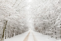 Winter landscape with road under a bow of snow covered trees