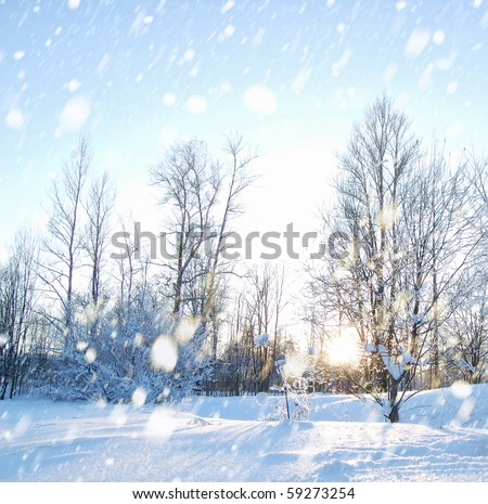 Winter landscape with snow