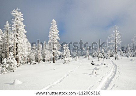Winter landscape with snow and trees, Czech Republic