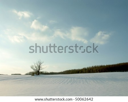 Winter landscape with snow covered field on the background of blue sky and clouds.