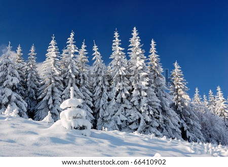 Winter landscape with snow in mountains Carpathians, Ukraine #66410902