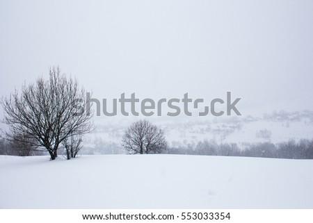 winter landscape with snowed...