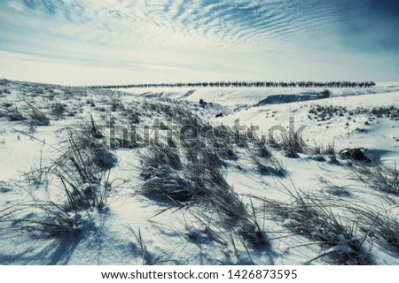 Winter landscape with steppe covered snow. Icy grass in snowy prairie. Vintage stylization, retro film filter #1426873595