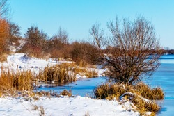 Winter landscape with trees and dry reeds by the river
