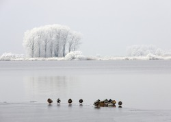 winter landscape with trees and ducks