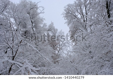 Winter landscape with trees cowered with snow after snowfall. Snowfall concept. #1410440279