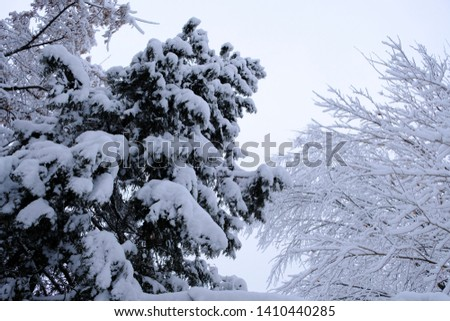Winter landscape with trees cowered with snow after snowfall. Snowfall concept. #1410440285
