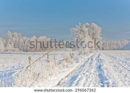 Winter landscape with trees snow wrapped by ground road and misty sunrise