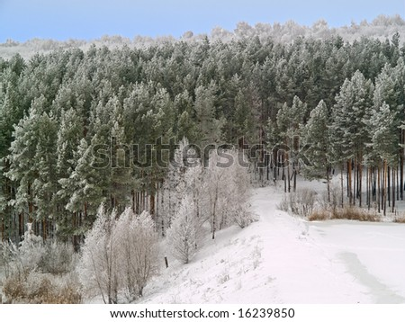 winter landscape with white frost pines on the hills