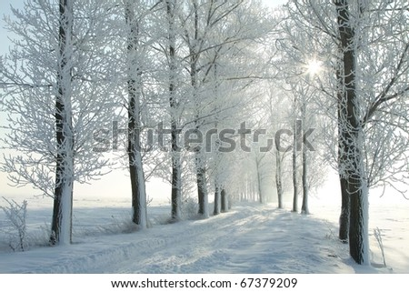 Winter lane among frosted trees in the morning. Photo taken in December.