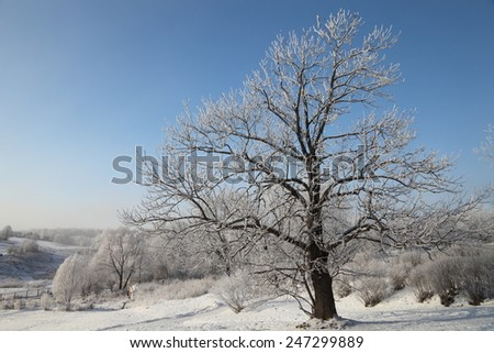 Winter morning landscape panorama with tree covered hoarfrost and snow at very cold weather.  Beautiful Christmas card.