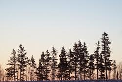 Winter Morning Treeline with sunrise backgorund.