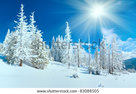 Winter mountain panorama with fir forest on mountainside (Carpathian Mountains, Ukraine).