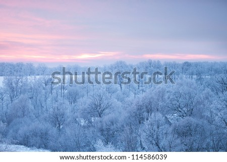 winter natural landscape. forest covered with snow