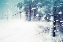winter nature background / trees branches with snow