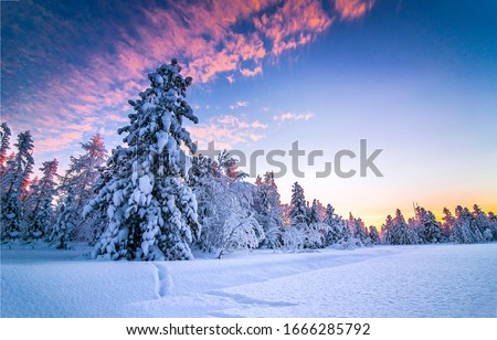 Winter nature forest sunset landscape. Snowy winter forest sunset sky. Winter sunset forest view. Winter snow forest sunset scene