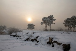 Winter nature sunset tree silhouette. Winter sunset tree snow patterns. Dense fog over the river in winter. Sunrise in the thick winter fog. landscape Trees with snow in a park. Sunset Dawn.
