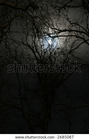 winter night forest