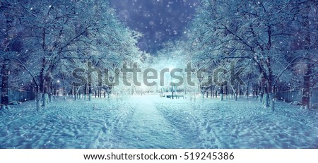 winter night in the park