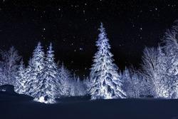 Winter night landscape. Spruce forest in winter