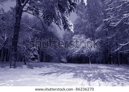 winter night landscape with dark snowy trees Park scene. Night shot. - stock photo