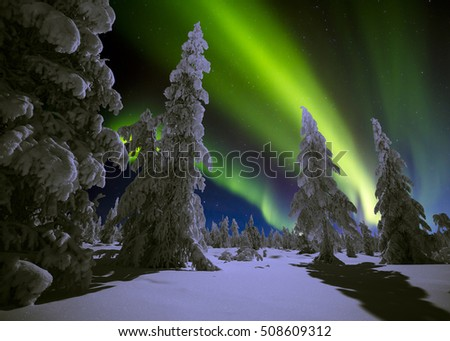 Winter night landscape with forest and polar northern lights. Canada landscape. Night.  #508609312
