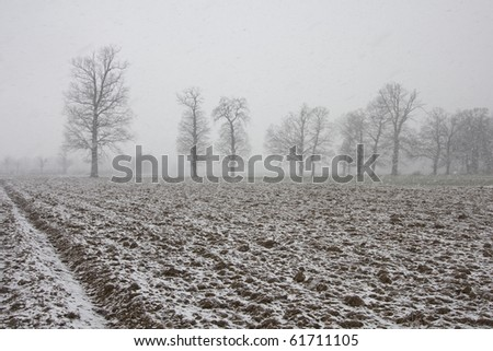 Winter on the field