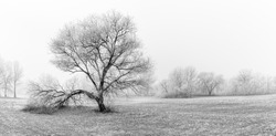 Winter panorama landscape with lonely tree with forest, trees covered snow. Seasonal cold snowy weather, frozen trees and grass, black and white, monochrome photo process