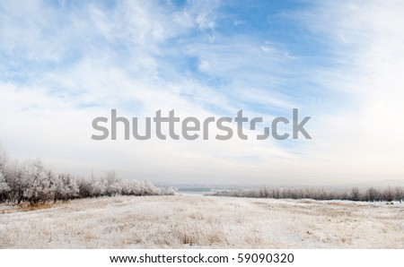 Winter panorama with beautiful blue sky and trees in snow