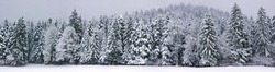 Winter panorama XXL