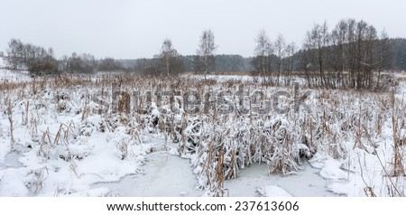 Winter panoramic landscape in snow and bad weather on the swamp on the edge of the forest