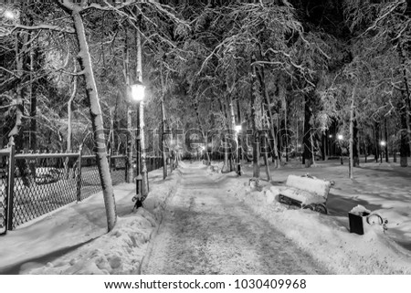 Winter park at night with decorations, lights, benches and trees. Christmas spruce on a baxhground. Monochrome. #1030409968